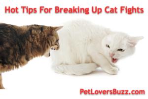 Dog Breaking Cat Fight